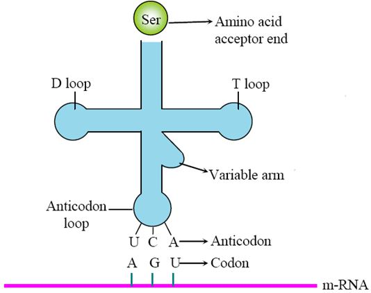 cbse class 12 biology 2017 question paper with answers