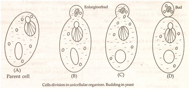 cbse class 12th biology notes reproduction in anisms Nuclear Fission what is fission name the type of fission
