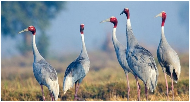 crane association madhya pradesh