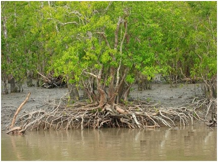 essay on sundarban national park
