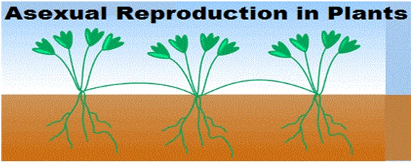 All types asexual reproduction