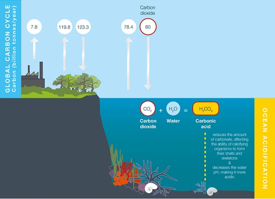 Acidification of Ocean