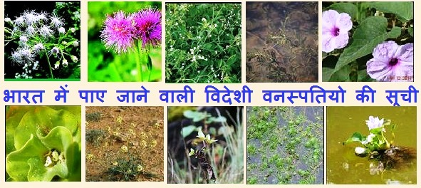 Alien Invasive Flora
