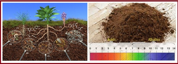 What Is Alkaline Soil And How Gypsum Helps In The Treatment