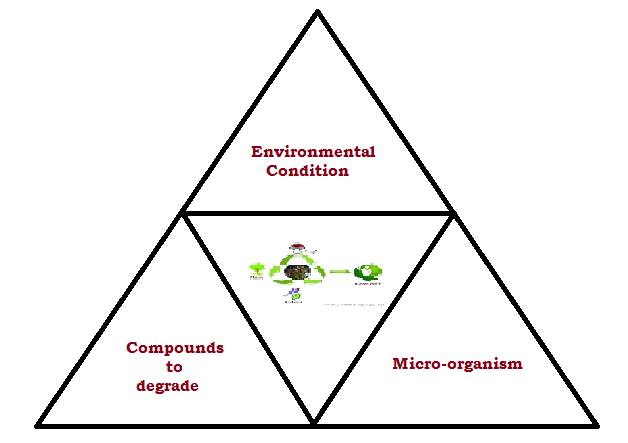 What is the difference between Biodegradation and