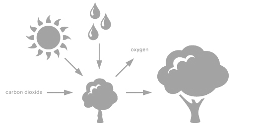 Biological Sequestration (Biosequestration) and Photosynthesis