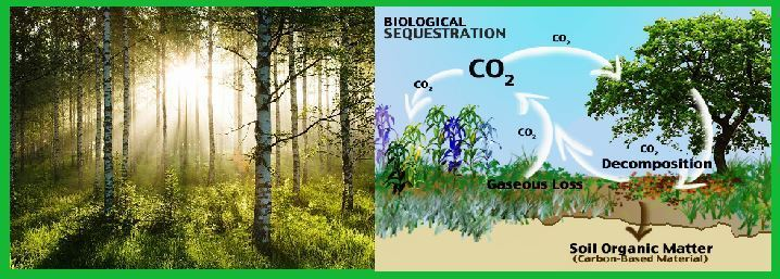 Biological Sequestration (Biosequestration): Concept, Importance and Need