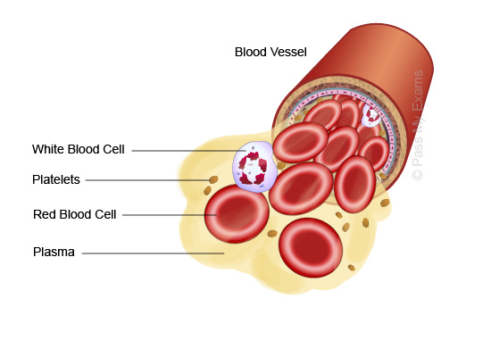 Blood-Components