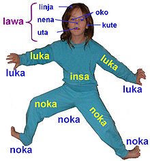 Body part name in Toki Pona