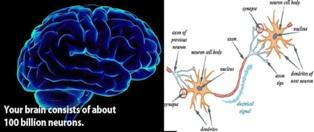 Brain has neuron cells