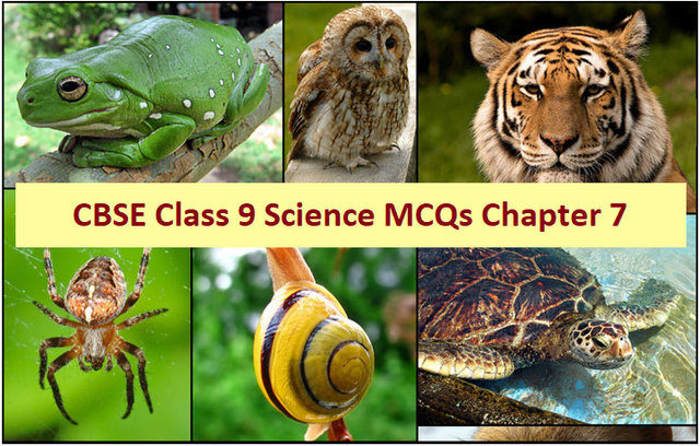 CBSE Class 9 Science Important MCQs from Chapter 7 Diversity in Living Organisms for Annual Exam 2020