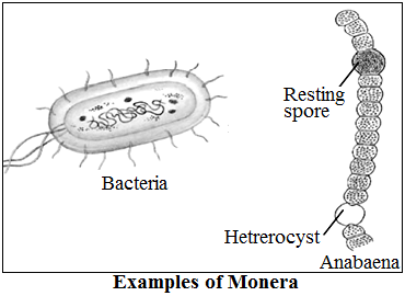 Monera Classification Examples
