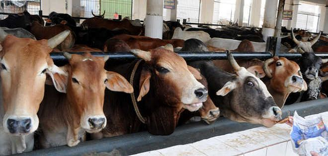 What is Cow Cess and which Indian States impose it?