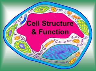 GK Questions & Answers on Science: Biology- Cell: Structure and