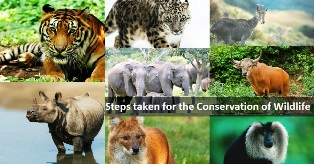 Conservation-of-wildlife