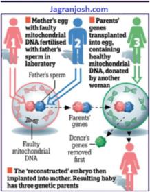 Mechanism of 3 parent Baby