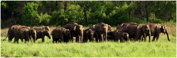 Elephant Reserves in India