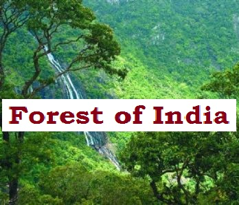 Gk Questions and Answers (GK Quiz) on the Forest of India