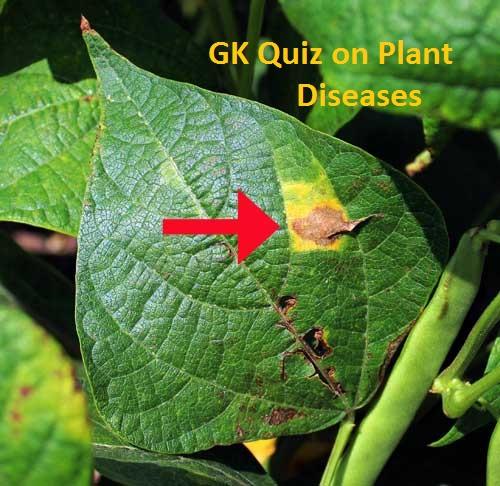 GK Quiz on Plant Diseases