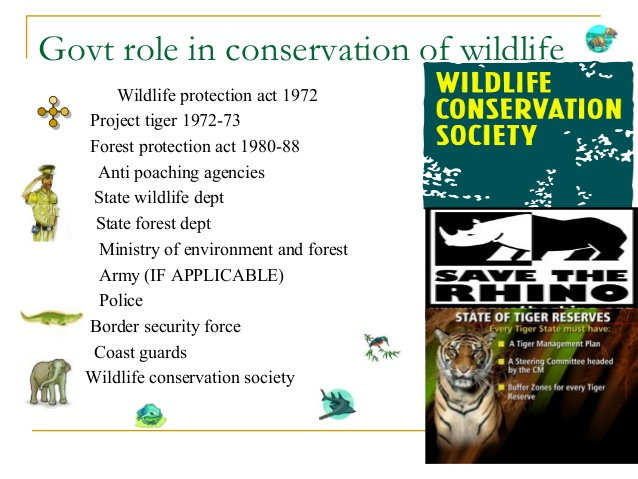 Government-role-in-wildlife-conservation