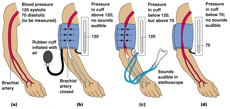 How-Blood-Pressure-is-Measured