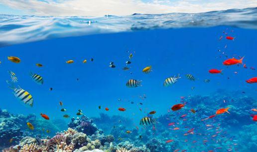 Importance of ocean