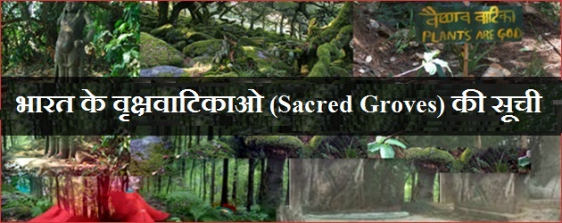 Indian Sacred Groves