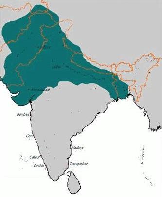 Khilji Dynasty