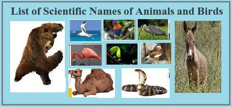 List of Scientific Names of Animals and Birds
