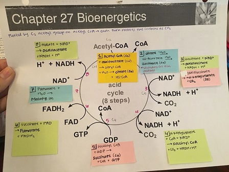 Mind map of a chapter