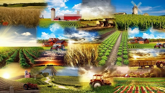 Modern Agriculture And Its Impact On The Environment border=