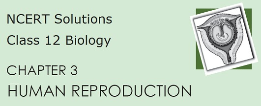 NCERT Solutions for CBSE 12 Biology, Chapter 3 in PDF format