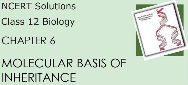 Download NCERT Solutions for CBSE Class 12 Biology - Chapter 6, Molecular Basis of Inheritance