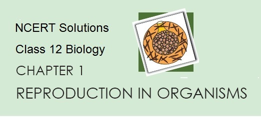 NCERT Solutions for CBSE Class 12 Biology ‒ Chapter 1 Reproduction in Organisms