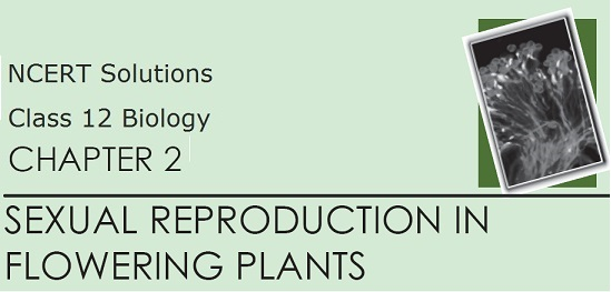 Download NCERT Solutions for Class 12 Biology - Chapter 2: Sexual Reproduction in Flowering Plants