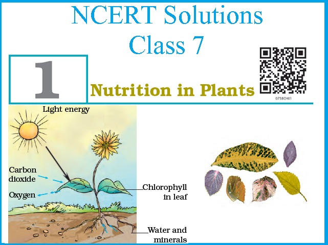 NCERT Solutions for CBSE 7th Science: Chapter 1 – Nutrition