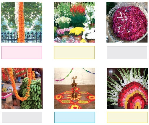 Ncert Class 4 Evs Solutions Chapter 11 The Valley Of Flowers