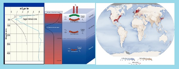 Do you know the meaning of Oxygen Minimum Zone and Dead Zone