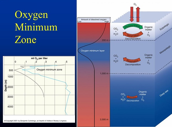 Oxygen Minimun Zone