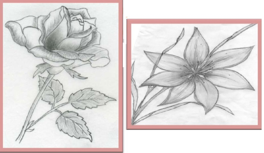 Drawing of plants