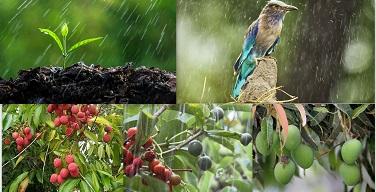 Pre-Monsoon Rain