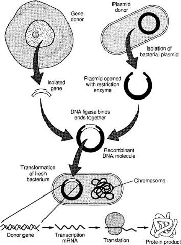 Rcomibanat-DNA-technology