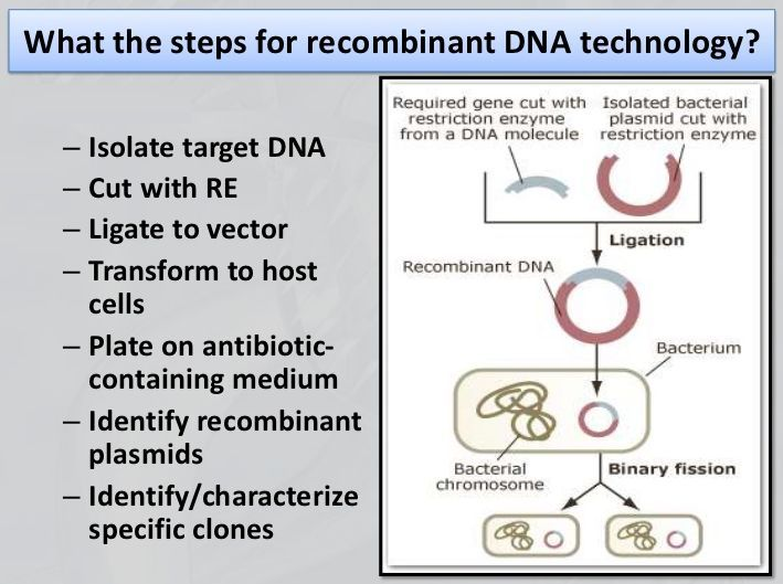 Recombinant DNA technology steps