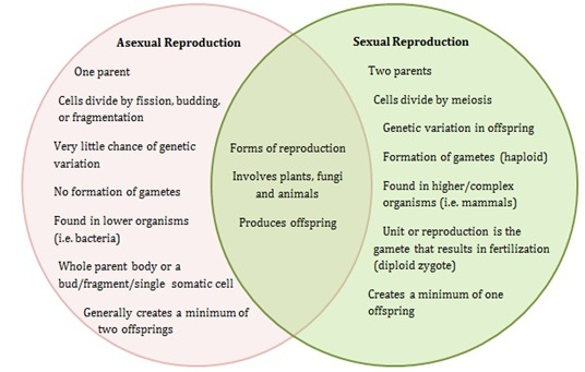 comparison of sexual and asexual reproduction in plants Sexual and asexual reproduction 2 00:10:10 sexual reproduction in flowering plants 00:12:33 asexual and sexual reproduction - advantages and disadvantages.