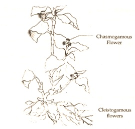 types of flower
