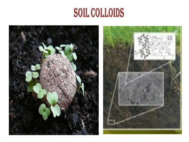 Soil Colloids- Types, Properties and Importance