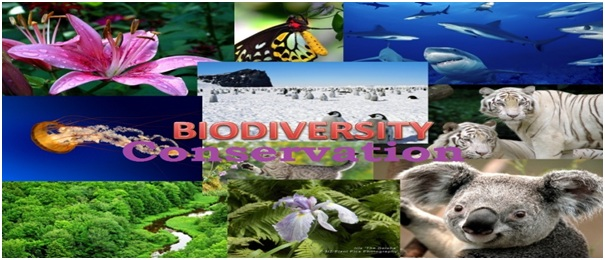 the importance of conserving biodiversity Biodiversity, a portmanteau of  protected areas have been set up all over the world with the specific aim of protecting and conserving plants and.