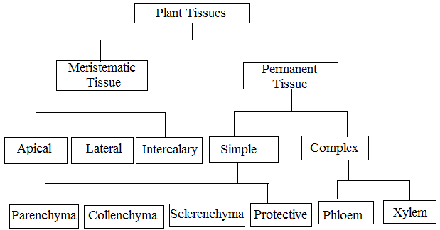 Types of Plant Tissues