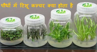 What is Tissue culture and its importance?