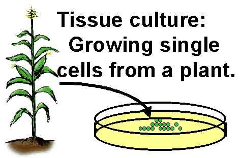 Tissue-culture
